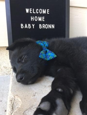 baby bronn 3